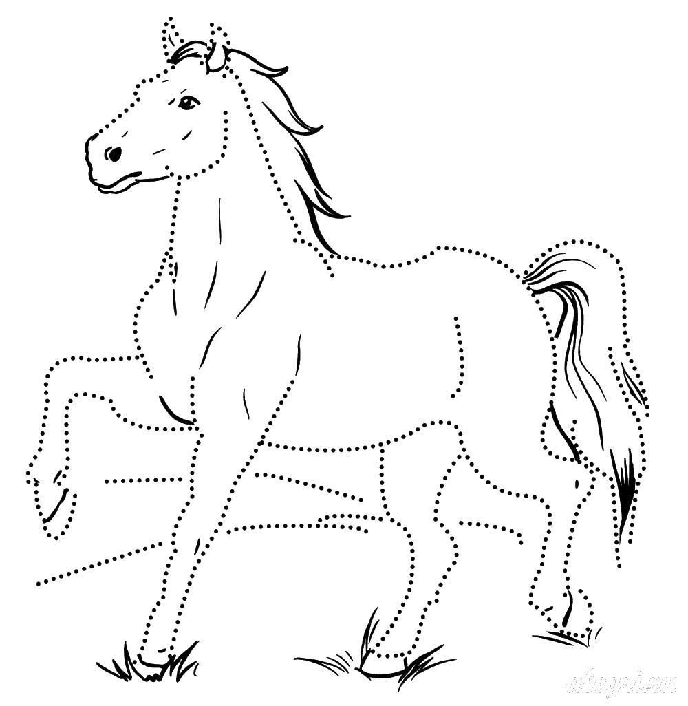 Обведи линии лошади Раскраски для девочек бесплатно
