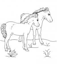 Лошадки Распечатываем раскраски цветы бесплатно