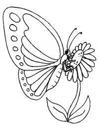 Бабочка на цветке Раскраски цветы для девочек
