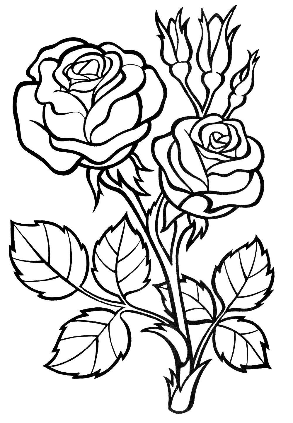 Розы с бутонами и шипами Раскраски цветочки  для девочек