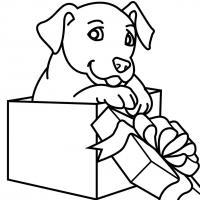 Щенок в коробке Раскраски для девочек бесплатно