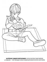 Мальчик с котенком сибирской кошки Для детей онлайн раскраски с цветами