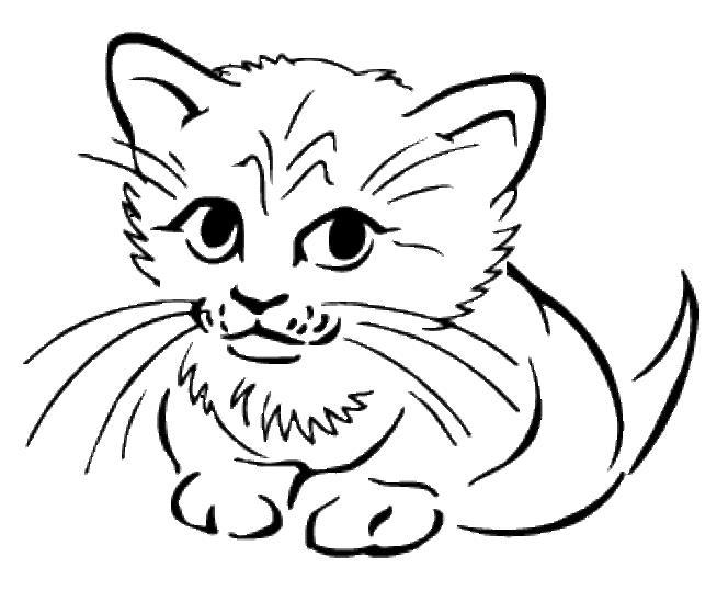 Котенок с длинными усами Для детей онлайн раскраски с цветами