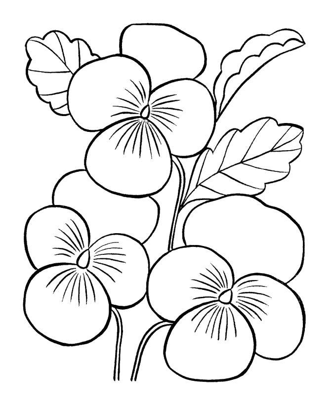3 цветка Раскраски для девочек скачать