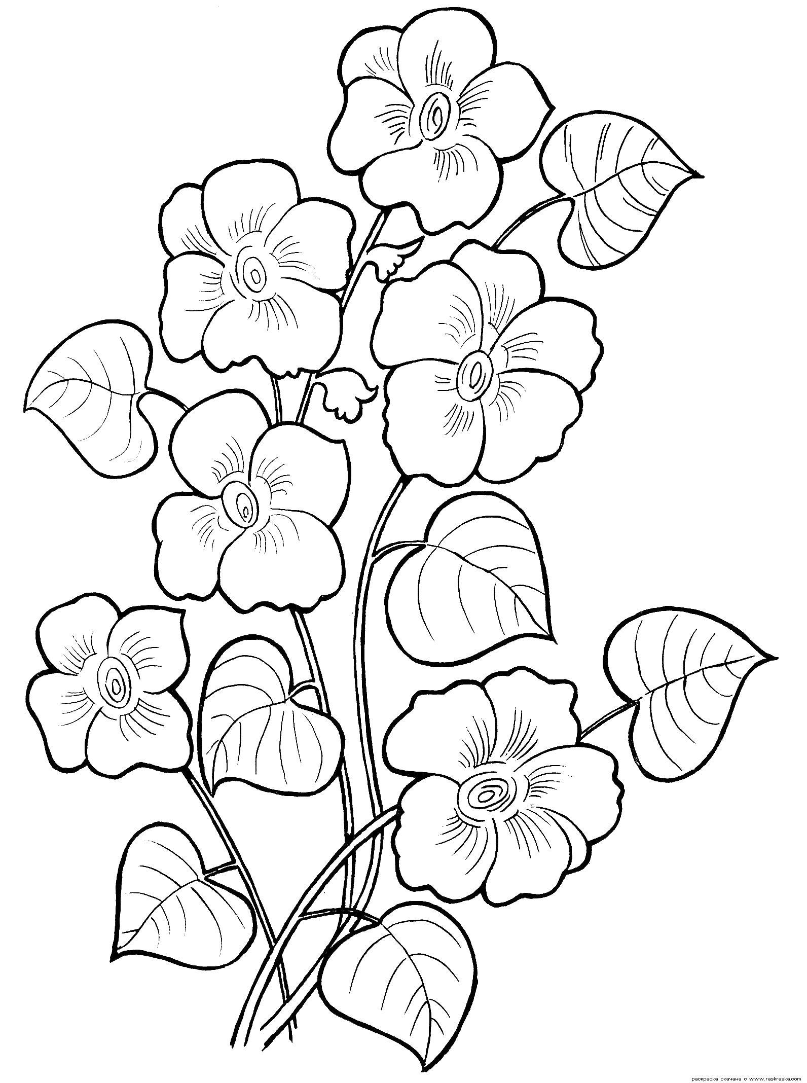 Много цветы Раскраски для девочек скачать