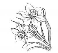 Цветы красивы Раскраски для девочек скачать