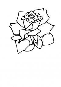 Цветы роза Раскраски с цветами распечатать бесплатно