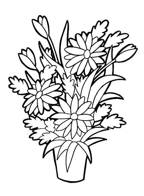 Цветы в горшке Раскраски с цветами распечатать бесплатно