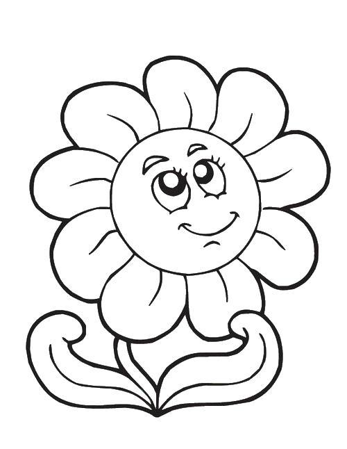 Цветок ромашка Раскраски с цветами распечатать бесплатно