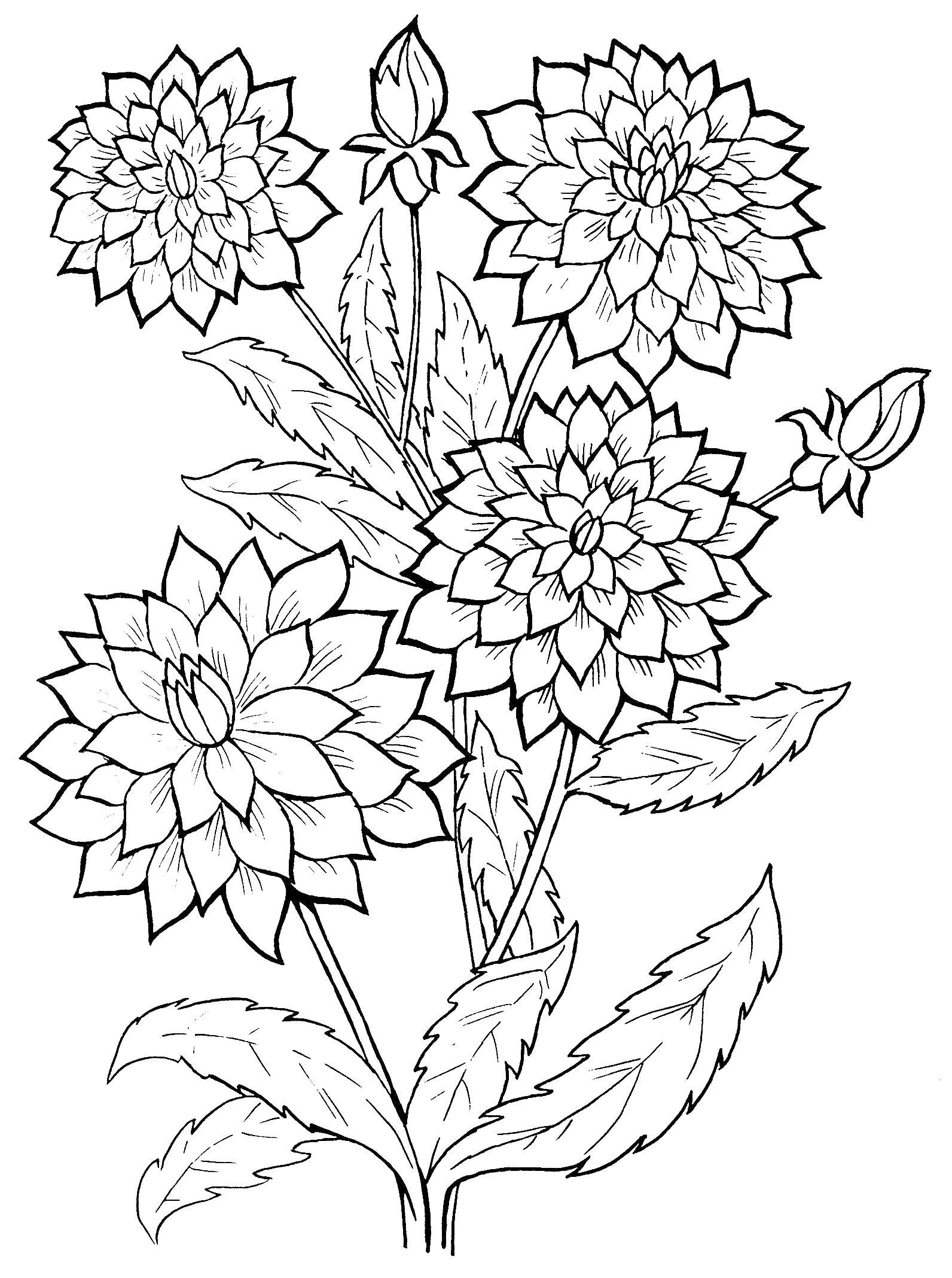 Цветы густые Онлайн бесплатные раскраски цветы