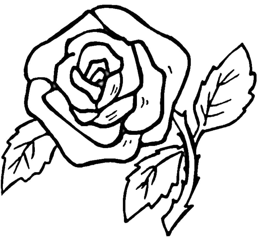 Цветок роза Раскраски с цветами распечатать бесплатно
