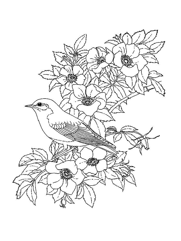 Цветы, птица Раскраски с цветами распечатать бесплатно