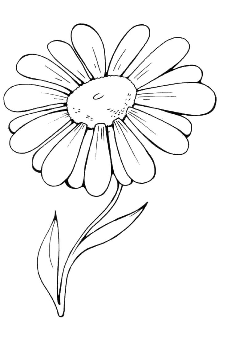Цветы ромашка Раскраски с цветами распечатать бесплатно