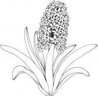 Цветы с большими листьями Раскраски с цветами распечатать бесплатно