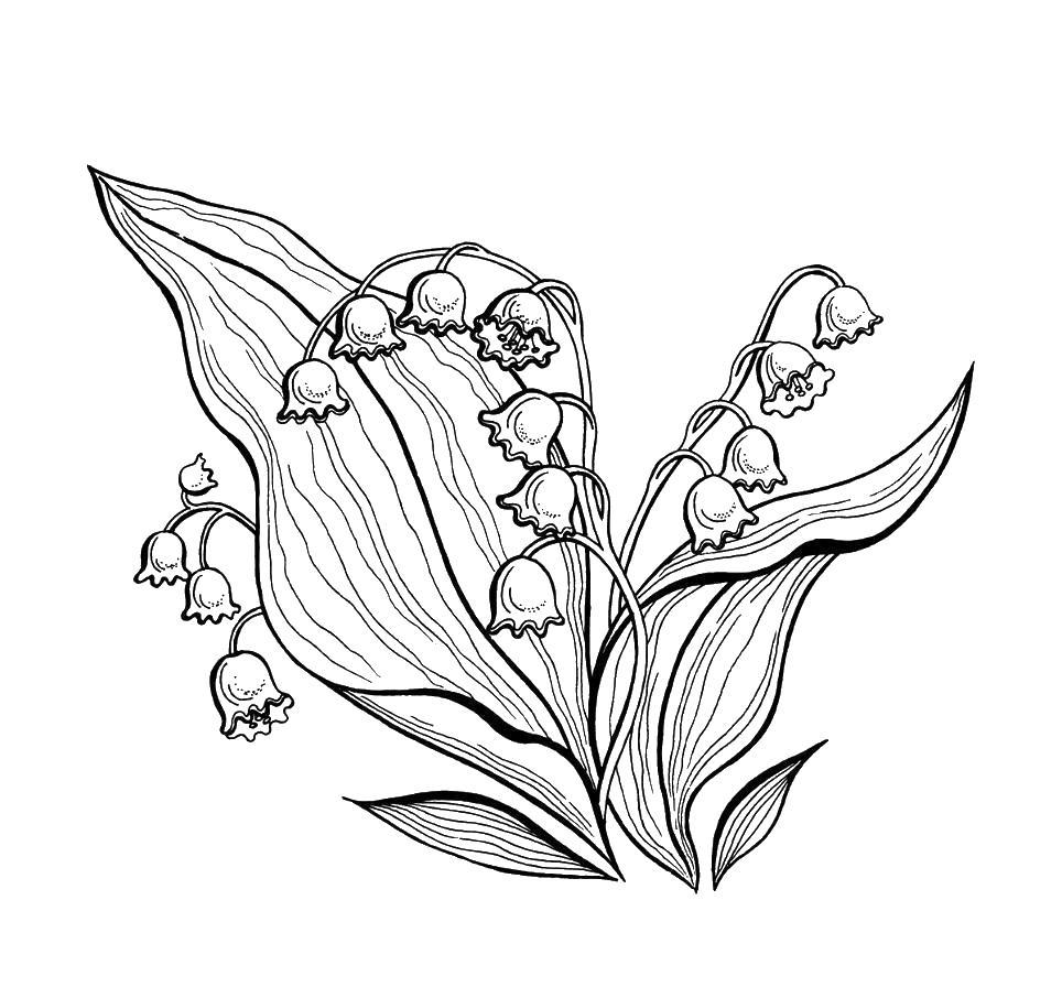 Цветы ландыш Раскраски для девочек распечатать