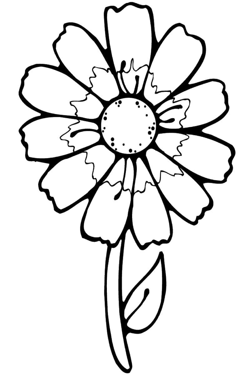 Цветок маленький Раскраски с цветами распечатать бесплатно