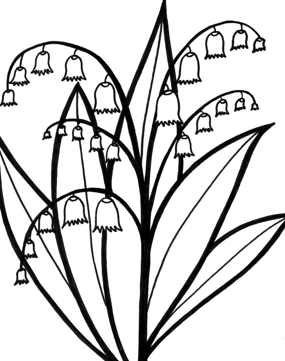 Цветы ландыш  ветками Раскраски для девочек распечатать