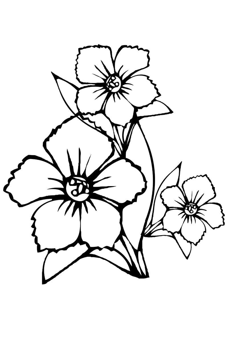 Цветы Картинки раскраски цветы
