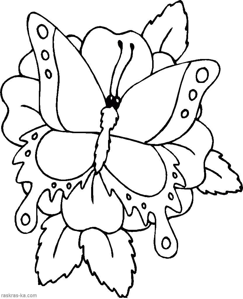 Цветы с бабочкой Раскраски для девочек распечатать