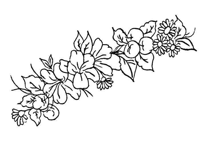 Разновидные цветы Раскраски цветов скачать