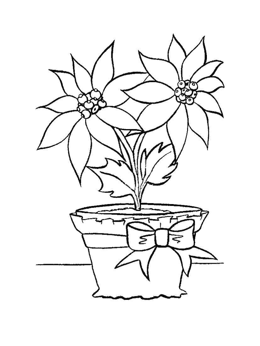Цветы, дом Раскраски для девочек распечатать