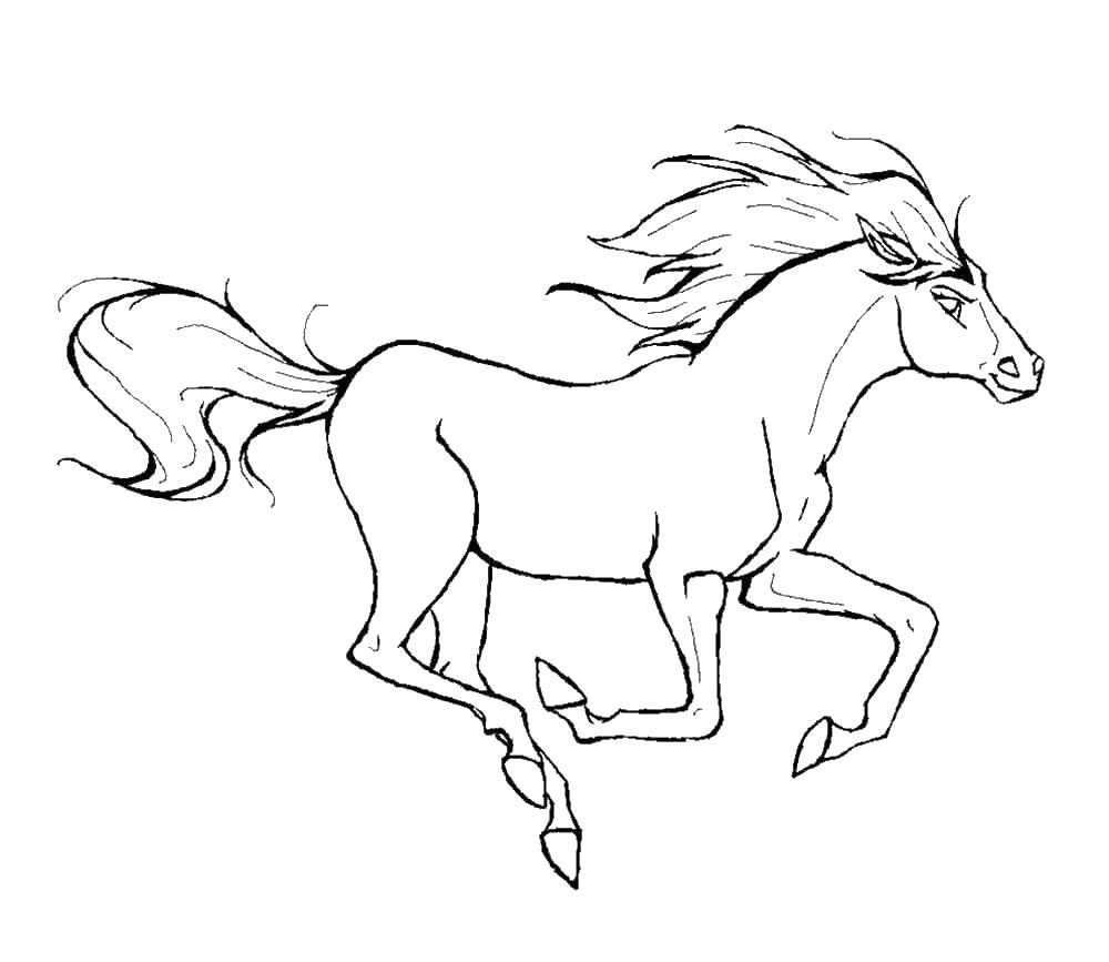 Раскраска лошадки расраска Раскраски для девочек онлайн