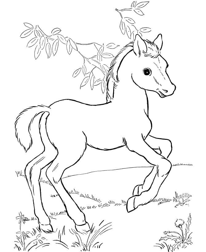 Лошадка красивый Раскраски с цветами распечатать бесплатно