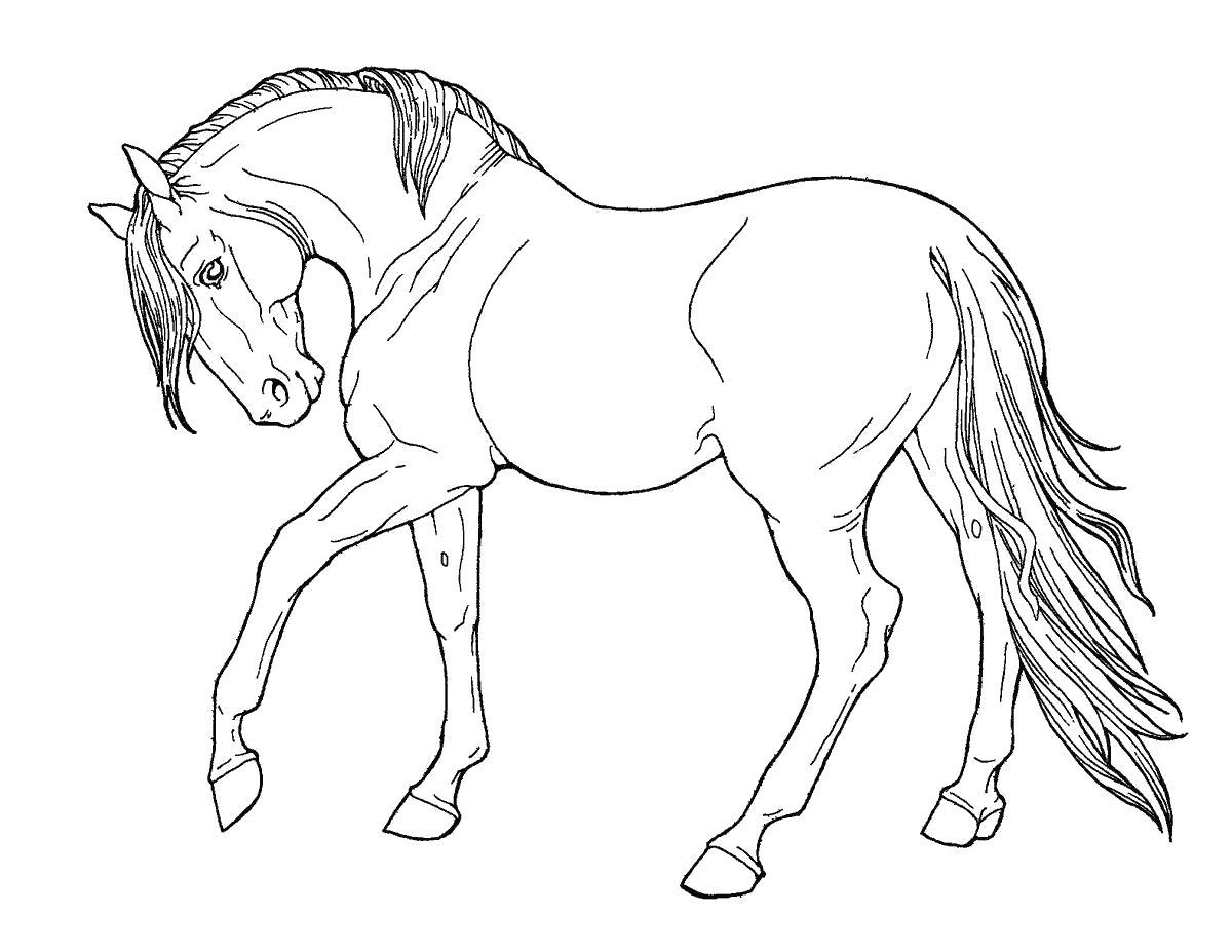 Лошадь скакун Раскраски с цветами распечатать бесплатно