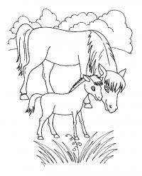 Лошадка с мамой Раскраски с цветами распечатать бесплатно