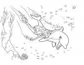 Русалочка с дельфином очень быстро плывут Картинки раскраски цветы