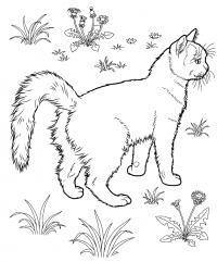 Кот в лесу Раскраски с цветами распечатать бесплатно