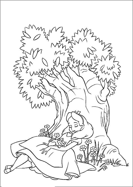 Алиса спит на краю дерева Найти раскраски цветов