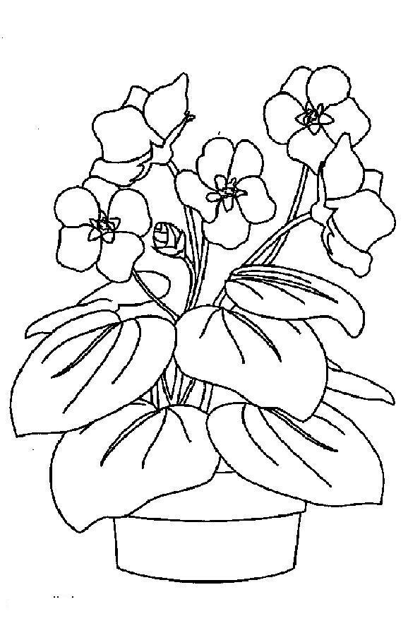 Цветы Цветочки в горшочке Раскраска цветок для скачиванияРаскраски для девочек