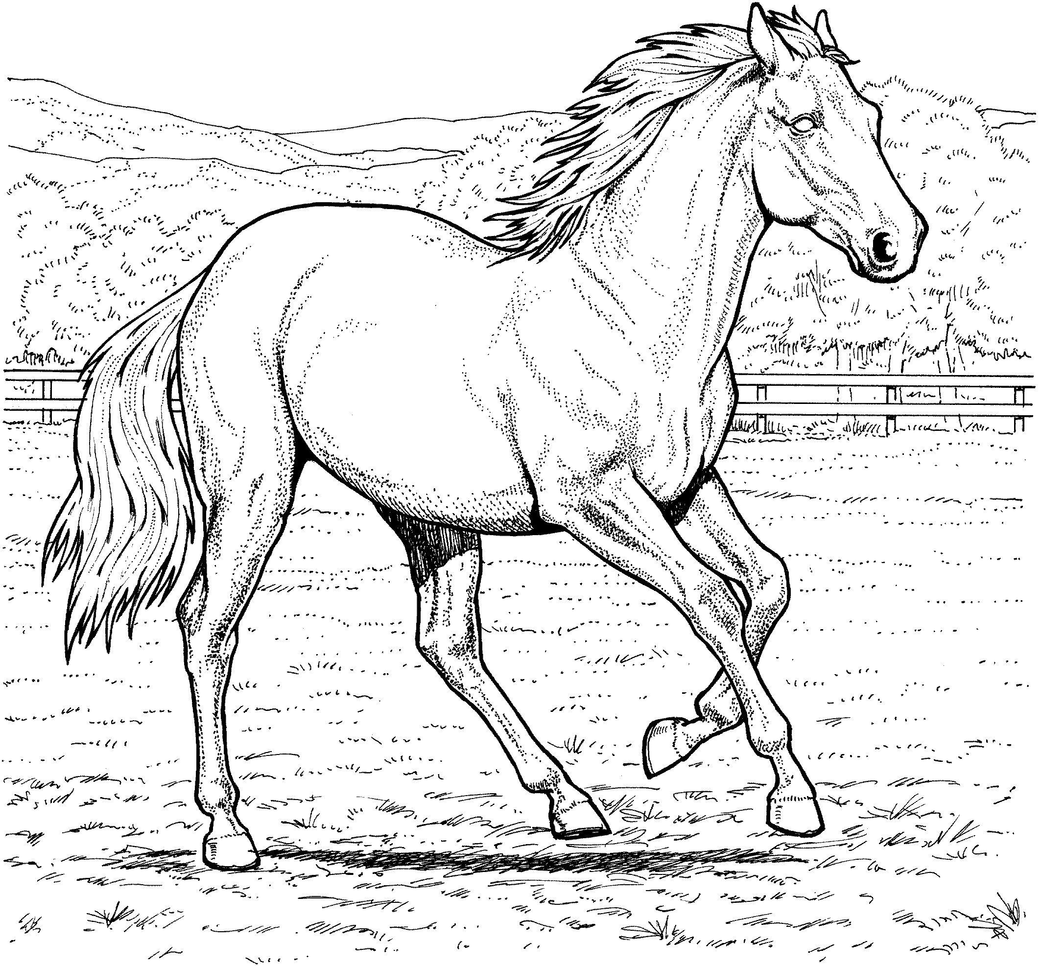 Лошадь в загоне Распечатываем раскраски цветы бесплатно