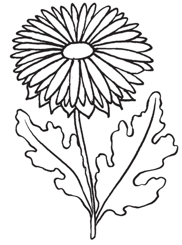 Садовая ромашка Онлайн бесплатные раскраски цветы