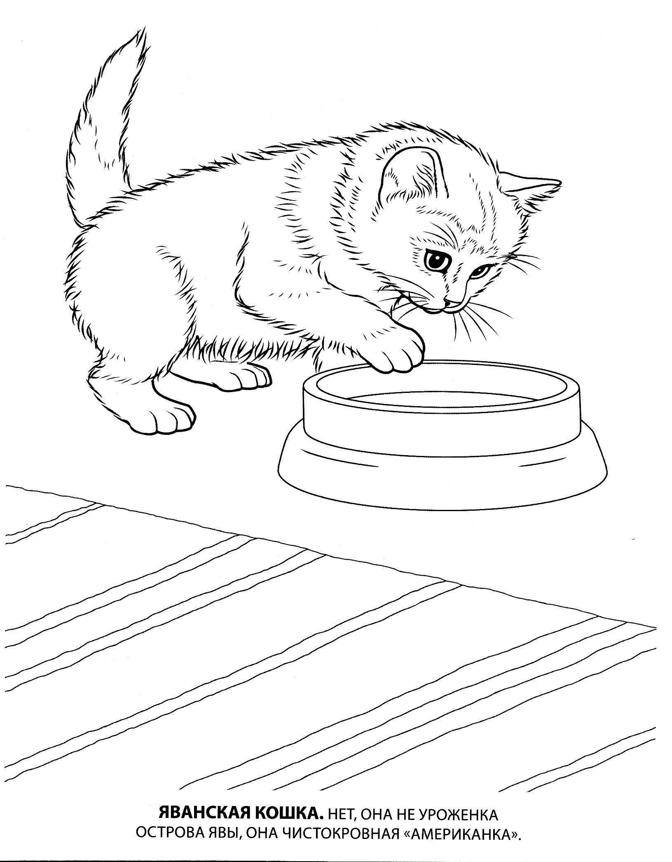 Яванская кошка Для детей онлайн раскраски с цветами