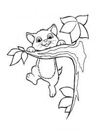 Котенок повис на ветке Для детей онлайн раскраски с цветами