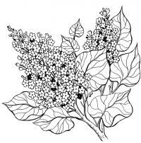 Цветы, раскраска Раскраски с цветами распечатать бесплатно
