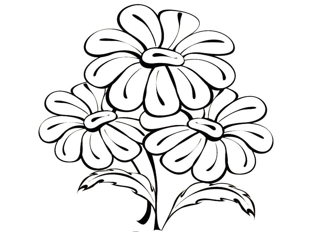 Цветы Раскраски с цветами распечатать бесплатно