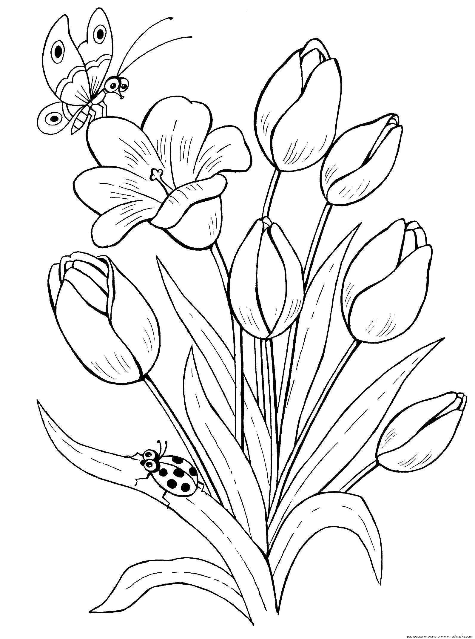Цветы, насекомые Онлайн бесплатные раскраски цветы